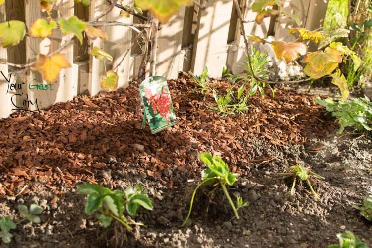 October Gardening