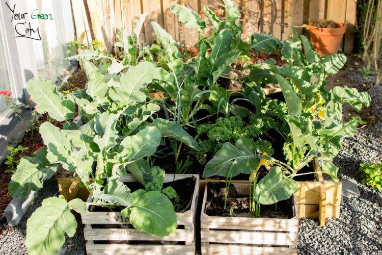 Mid November Growing