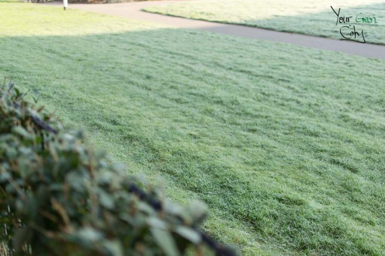winter garden frost