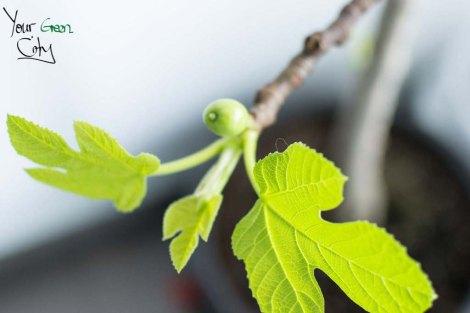 Fruit_trees