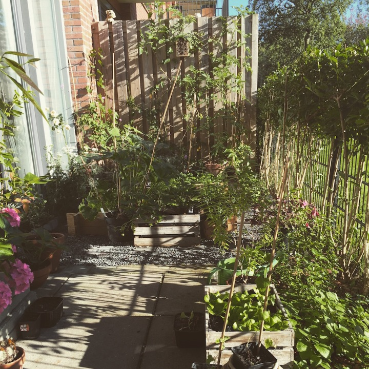 raised bed small garden