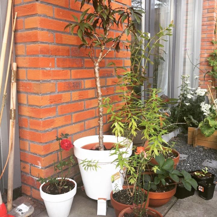 small garden white pots