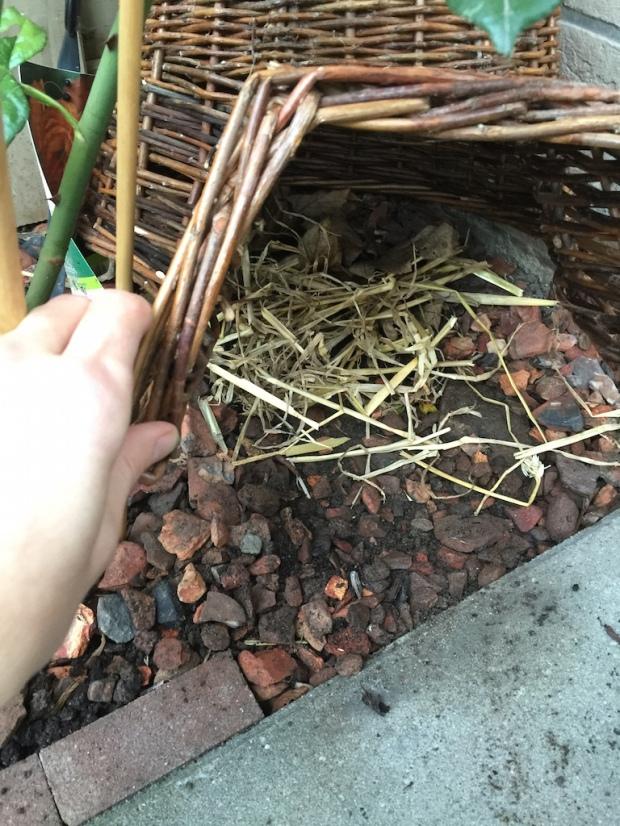 hedgehog urban garden winter